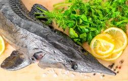 Top down of fresh raw sturgeon fish with greens, lemon, differen royalty free stock photo