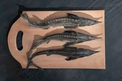 top down of raw sturgeon fish on wooden background royalty free stock photos
