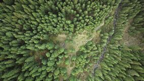 Top down green conifer forest at mountain ranges aerial. Nature landscape at autumn. Tourists climb