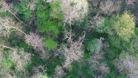 Top down luchtlengte van Middeneuropees de lente breedbladig bos, 4K stock footage