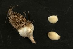 Top down mening, knoflookbol met bruine wortels en twee pelde kruidnagels op donkere raad stock afbeeldingen