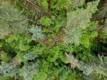 Top down mening van bosbomen in van de Zuid- spearfishcanion Dakota Royalty-vrije Stock Foto's