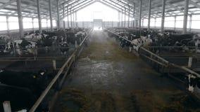 Top down mening van een byre waar het vee wordt gehouden stock videobeelden