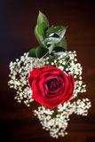 Top Down Shot of Beautiful Red Rose and Dew Drops Stock Images
