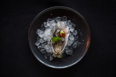 Top Down Shot of Creative Plate of Oyster One Ice Royalty Free Stock Photos