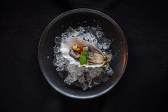 Top Down Shot of Oyster on Ice Royalty Free Stock Images