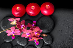 Top down spa composition of blooming twig red orchid flower, pha Royalty Free Stock Images