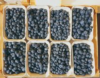 Top down view on boxes of blueberries royalty free stock images