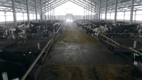 Top down view of a byre where cattle is being kept