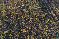 Top down view of a forest in autumn colors royalty free stock image