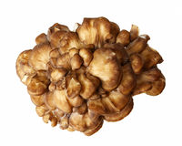Top Down View Of A Maitake Mushroom royalty free stock image