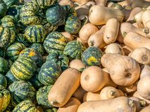 Top down view on microwave and butternut pumpkins royalty free stock image