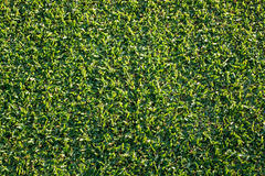 Top down view of newly mown grass lawn Royalty Free Stock Photo
