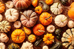 Top down view on various types of squash gourds. Top down view on various sizes and colors of squash gourds for concept about thanksgiving or autumn themes royalty free stock photo