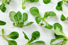 Top down view, wet cornsalad Valerianella locusta on white working board, healthy green leaves concept.  royalty free stock photos