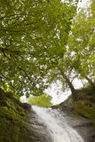 Top of the Fall. Looking up at the bright summer sky through the foliage of the green leafed trees. The top of a small waterfall flowing fast is in the bottom Stock Images