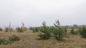 On the top of the forested dune on a stormy day. Curonian Spit Lithuanian side. All around are the small birch and pine trees. Very strong wind and foggy stock video