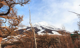 The top of Fujiyama and dry tree in Japan Royalty Free Stock Photography