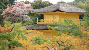 Top of golden pavilion temple, Kinkakuji. With colorful autumn sakura at Kyoto, Japan Royalty Free Stock Photo