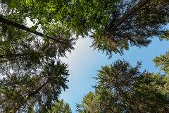 Top of the green forest Stock Photography