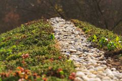 Top of green living roof covered with sedum sexangulare vegetation. Top of green living roof covered with vegetation mostly sedum sexangulare, also known as royalty free stock images
