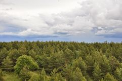 Top of the green pine forest in Estonia. Green pine forest and clouds in the blue sky from above Stock Images