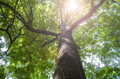 The top of a green tree Stock Photography