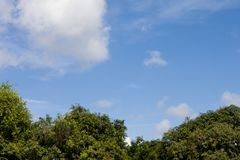 Tree under white cloud and blue sky. Top on the green tree under white cloud and blue sky Royalty Free Stock Image