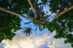 Top of green trees under blue sky Stock Photography