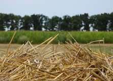Top of hayrick on the field after summer harvesting stock image Royalty Free Stock Photography