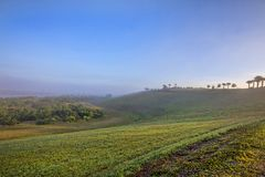 Top Of Celery Fields Hill On A Foggy Morning Stock Photos