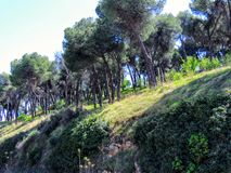 Top of a hill in Spain on which there is a grove of trees with stones. Top of a hill in Spain Europe on which there is a grove trees with stones Stock Images