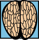 Top of human brain vector illustration Royalty Free Stock Photography