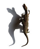 Top ivew Carcharodontosaurus toy with shadow Royalty Free Stock Images