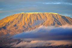 Top of kilimanjaro mountain in the sunrise Stock Photography