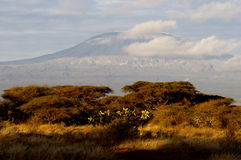 Top of kilimanjaro mountain in the sunrise. Sunrise on mount Kilimanjaro. Kenya. Amboseli national park Stock Photo