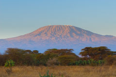 Top of kilimanjaro mountain in the sunrise Stock Photos