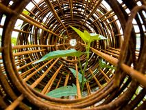 Leaf of morning glory insert in roll of rusty steel wire mesh Stock Images