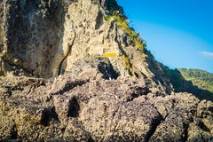 The top of Lion Rock at Piha Beach,New Zealand royalty free stock photography