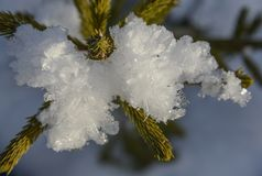 Fir-tree with snow - close-up Stock Image