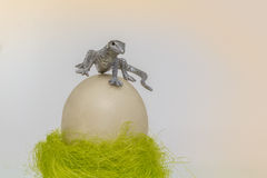 On the top. Lizard on an ostrich egg Royalty Free Stock Photo