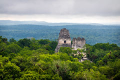 Top of mayan temples at Tikal National Park - Guatemala Royalty Free Stock Image