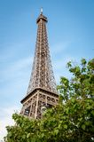 Eiffel tower above the trees Stock Images