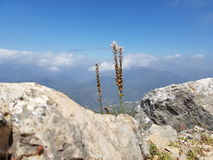 On top of Mountain in Marbella Spain Stock Photos