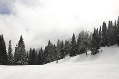 Top of the mountain with snow. Top of the mountain cover with snow, with some threes and clouds in the sky Stock Image