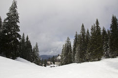 Top of the mountain with snow. Top of the mountain cover with snow, with some trees and clouds in the sky Stock Photography