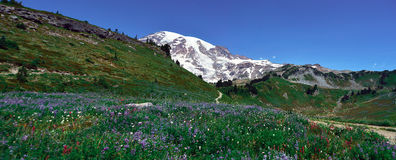 Top of mountain   view in Mt Rainier National Park Stock Photo