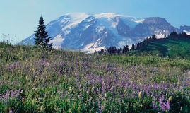 Top of mountain   view in Mt Rainier National Park Royalty Free Stock Photos