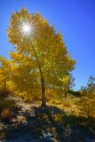 Top of Mt Whitney peeking above trees during fall. Fall colors are abundant, Mountains stand tall, welcome to the Eastern Sierras and Mt whitney, in Lone Pine Royalty Free Stock Photography