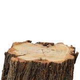 Top Of Stump Log Stock Image